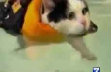VIDEO: News anchor cracks up over swimming cat