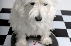 10 tips for tackling your dog's extra weight
