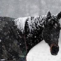 Horse smuggler talks about drugging animals before illegal slaughter