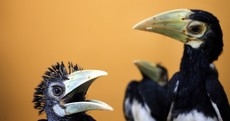 The Week in Photos: Wild thing