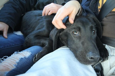 Finzi just after being rescued