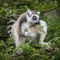 Expansion at Fota Wildlife Park to create 10 jobs