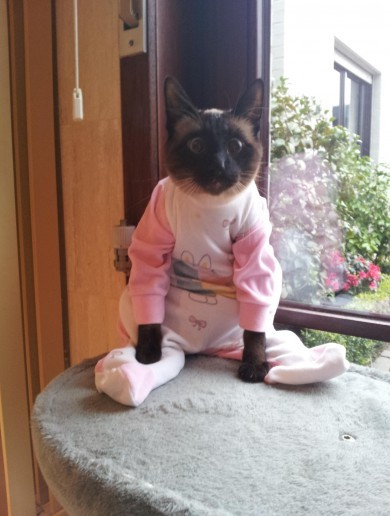 Goodnight everyone, here are puppies, cats, piglets and sloths in PJs