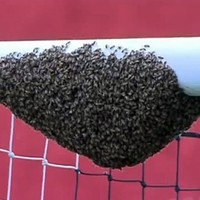 Brazilian football game delayed after a swarm of bees invaded goal