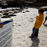 San Diego restricts beach use after seal abuse