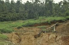 Disney invests in Peru to prevent deforestation