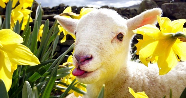 11 shocking cute reasons why you should buy a daffodil today