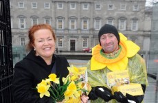 Daffodil Day collections down 50 per cent - but you can still help