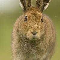 Irish Wildlife Trust calls on public to help change animal welfare bill
