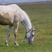 ISPCA want government to 'enforce legislation' as equine calls increase