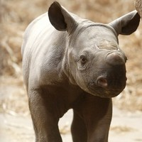 British wildlife parks being targeted by rhino poachers