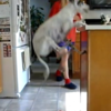 VIDEO: So just how hungry is this dog?