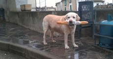 """Moi?"" Your dog stealing a baguette pic of the day"