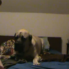 VIDEO: This dog does not want to get out of bed