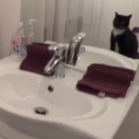 VIDEO: Cat poses in mirror, proves to be hilarious