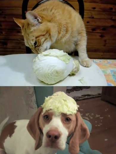 What is the story with dogs, cats and cabbages?