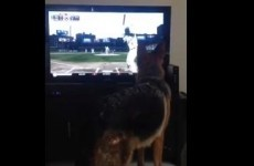 Dog doesn't like baseball, nearly smashes up flat-screen
