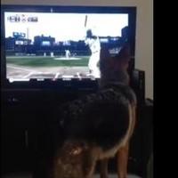 Dog doesn't like baseball, nearly smashes up flat-screen
