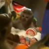 VIDEO: Dexter the monkey sees his reflection for the first time