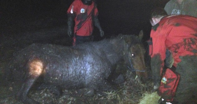 Rescue group save pregnant mare stuck in marsh