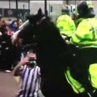 So it turns out the Newcastle fan who punched a horse is an animal lover