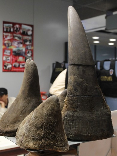 Rhino heads and horns stolen from Dublin museum archive
