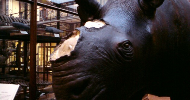 Stolen rhino horns were removed from exhibition 'due to risk of theft'