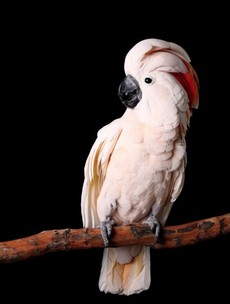 9 facts which will make you regret not thinking about cockatoos before