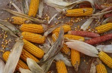 EU proposes to harmonise GM food tolerance policy