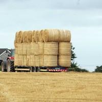 Coveney extends fodder scheme: 'No animals should die of starvation'