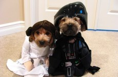 May the Fourth be with you, from us and these dogs