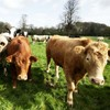 Fodder from France due tomorrow for stricken Irish farmers