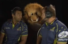 The Aussies' 'Living With A Lion' spoof will make you want to beat them even more
