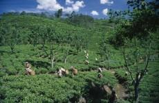 Sri Lanka sexes up image of Ceylon tea