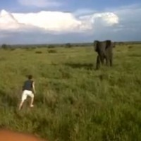 VIDEO: Safari guide drunkenly charges at an elephant (and then gets fired)