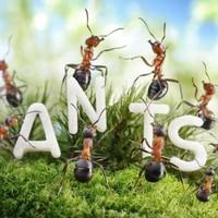 Eek! Warning of spike in ant infestations