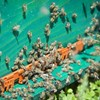 Honeybees trained to find land mines in Croatia