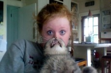 Why cat bearding is our current favourite internet craze