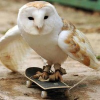 5 animals on skateboards who deserve their moment in the sun