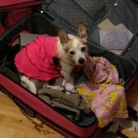 This is everything* you need to know about bringing your pet on holidays