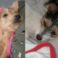 Two puppies beaten and thrown over 10-foot wall in Portlaoise
