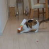 Cat manages to get head stuck in box, hilarity ensues