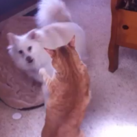 Cat and dog get into a scrap, but who will win?