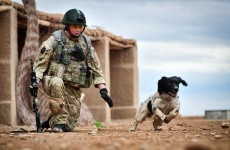 Top bomb sniffer dog in Afghanistan dies shortly after handler is killed