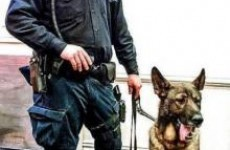 Police dog breaks four teeth after being kicked in the mouth catching an attacker