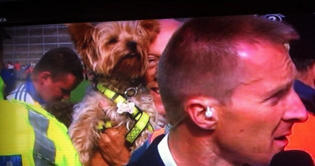 Twitter goes wild as dog photobombs Jamesie O'Connor interview