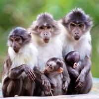 Ah would ya look, two endangered baby mangabeys born at Dublin Zoo