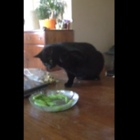 Cat versus bowl of peas... with musical accompaniment