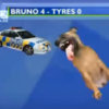 Hilarious graphic shows dog that gnawed through police car tyres