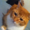 Twerking Cat is the best thing on Vine right now